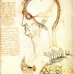 Leonardo da Vinci - Section of a Man's Head 1489