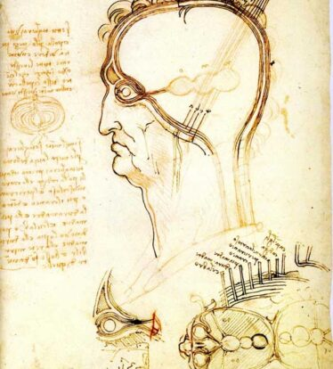 Leonardo da Vinci - Section of a Man's Head 1489